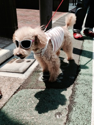 Cool dog in Harajuku