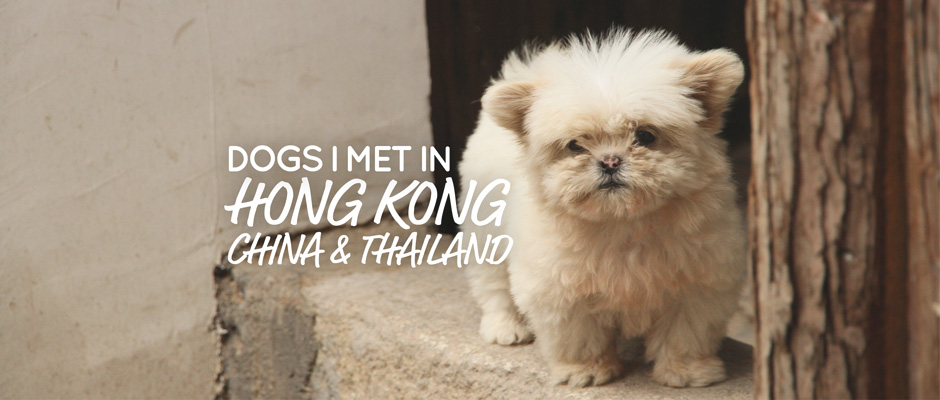 Dogs I met in Asia