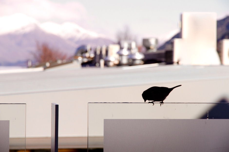 The Spire Hotel View Bird Queenstown Travel Blog Review Tips