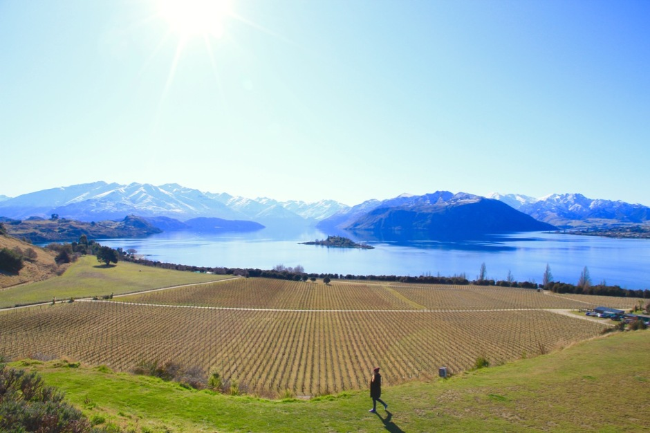 Rippon Vineyard Lake Wanaka Things To Do Travel Blog