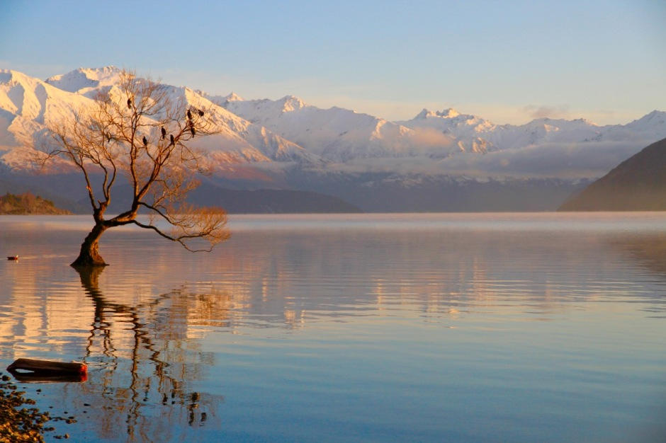 That Wanaka Tree Lake Wanaka Things To Do In Wanaka Travel Blog