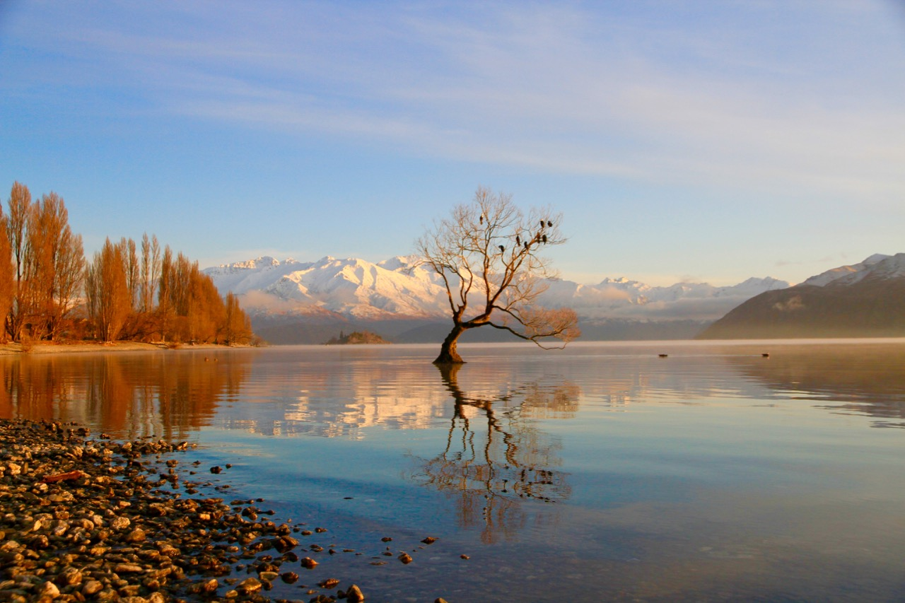 Lake Wanaka New Zealand Beautiful Wanaka Tree Travel Tips Blog