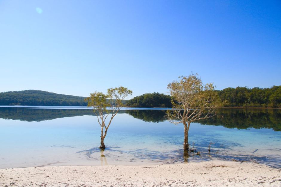 Lake McKenzie two trees Things to do on Fraser Island Travel Blog Australia Queensland