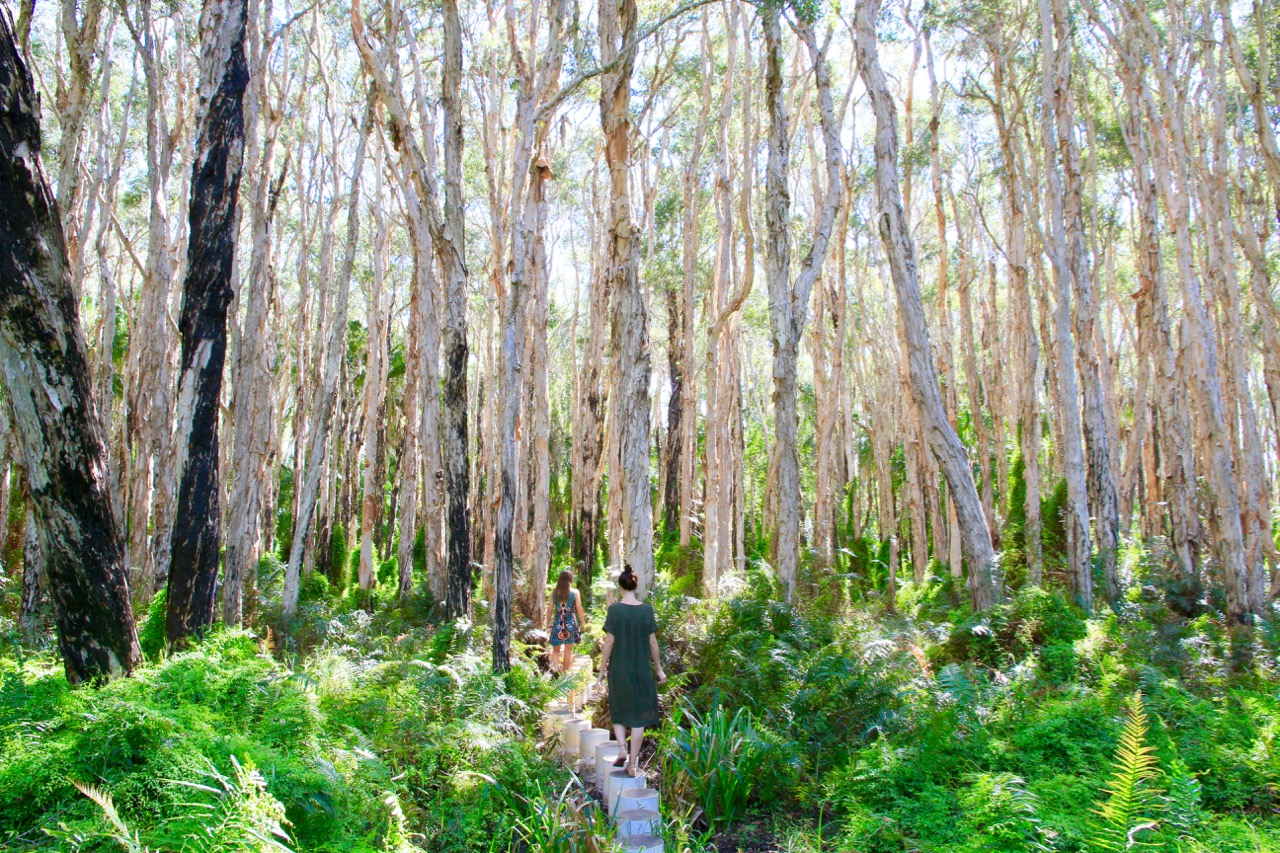 Paperbark Forest Agnes Water girls trip