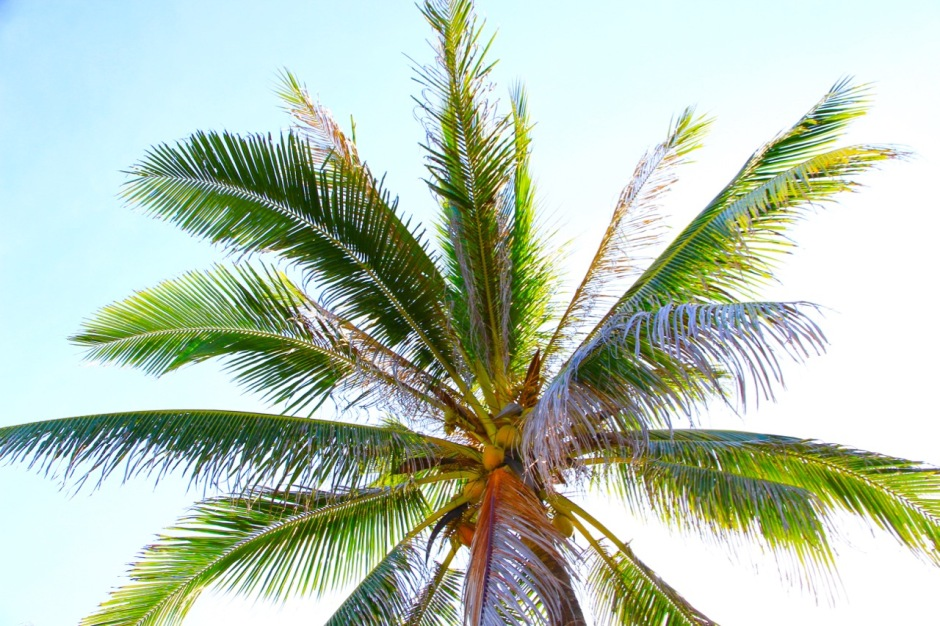 Palm Tree Know Before You Go Philippines