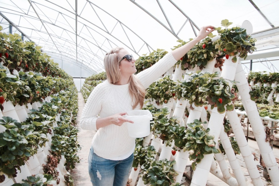 Phoebe Lee Travel Blogger Little Grey Box Australia Strawberry picking