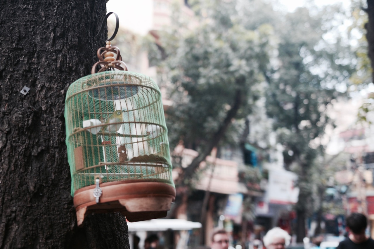 The essential first-timers guide to Hanoi