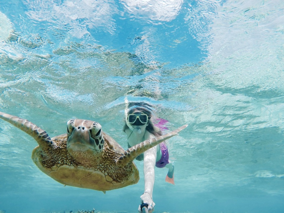 3 Excellent ways to have an unforgettable turtle encounter