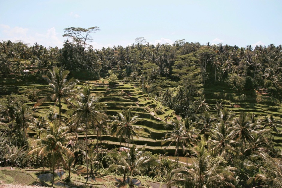 A simple guide to visiting Ubud's Tegalalang rice terrace
