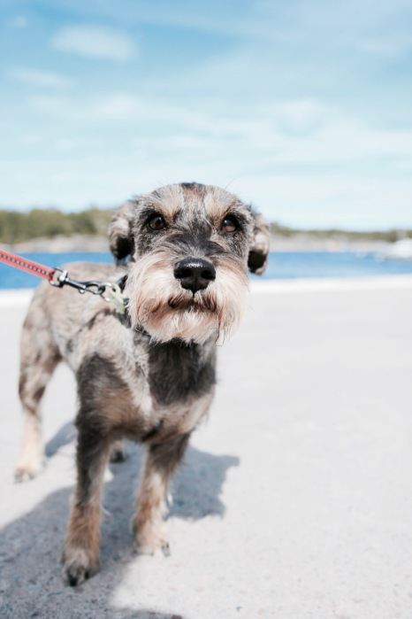 Gorgeous dogs exploring Stockholm, Sweden and Stockholm Archipelago