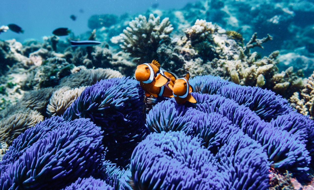 Beyond Gorgeous: Great Barrier Reef (46 PICS )