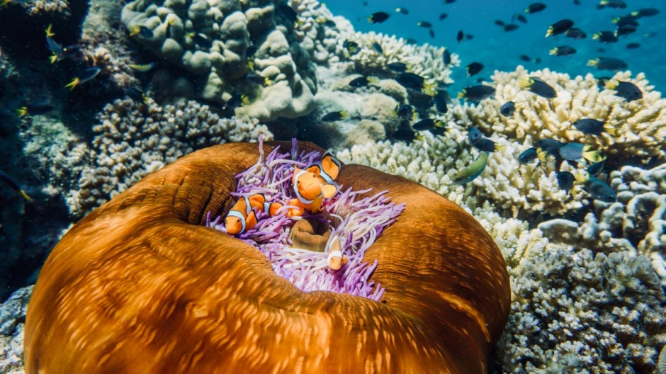 13 of the best ways to see the Great Barrier Reef