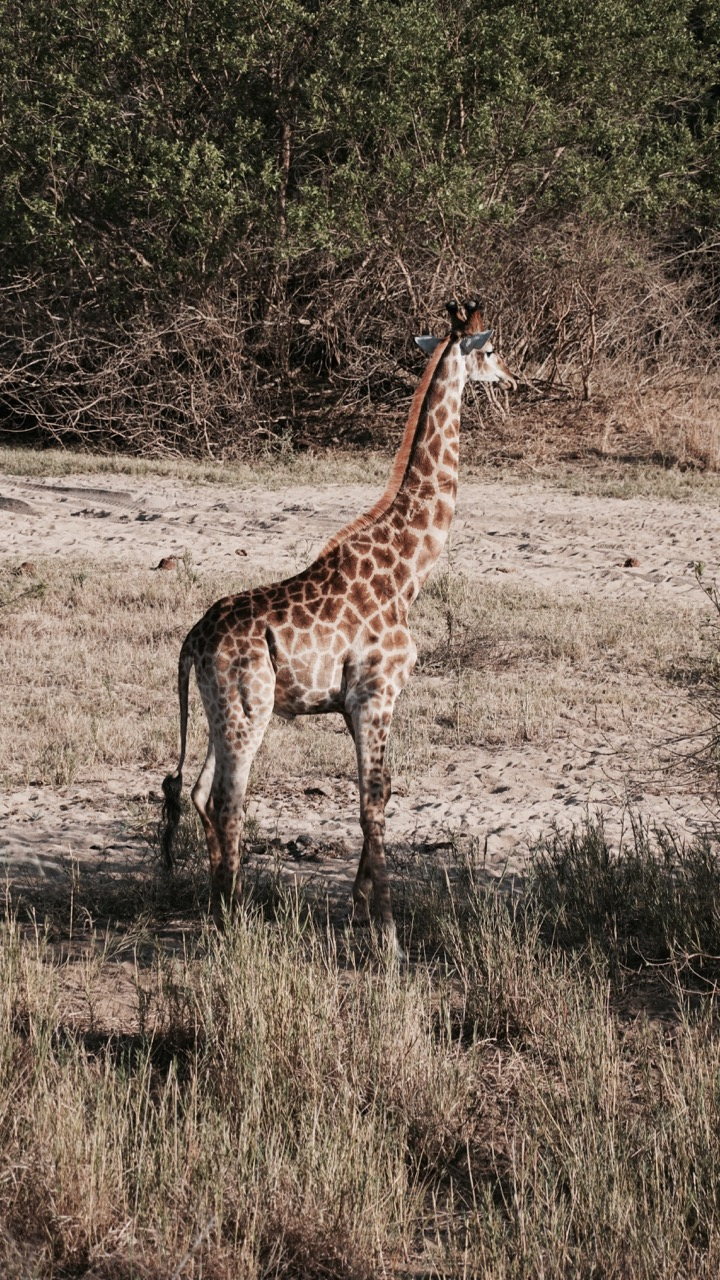 Favourite photos from our Safari in South Africa - 21